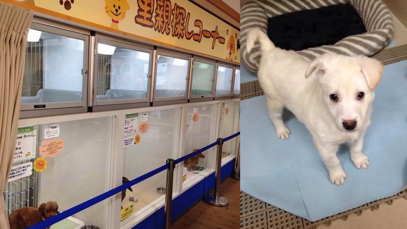 不賣寵物的寵物店,這裡是讓浪浪們重新被愛的家