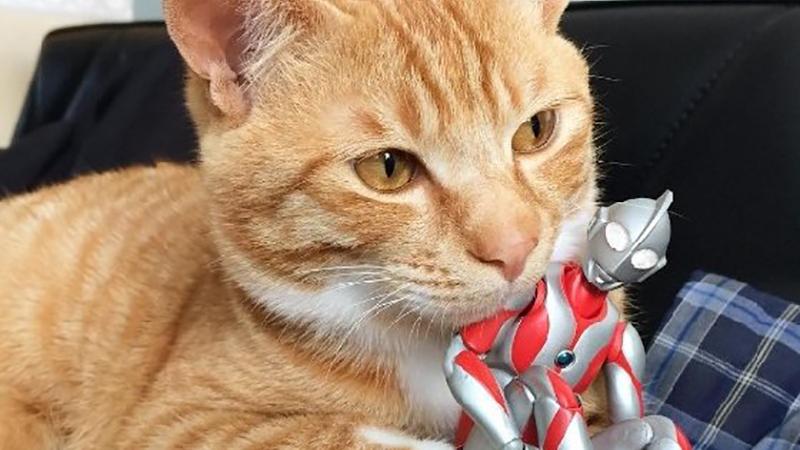 24小時膩在一起也OK!貓咪與鹹蛋超人的放閃日常
