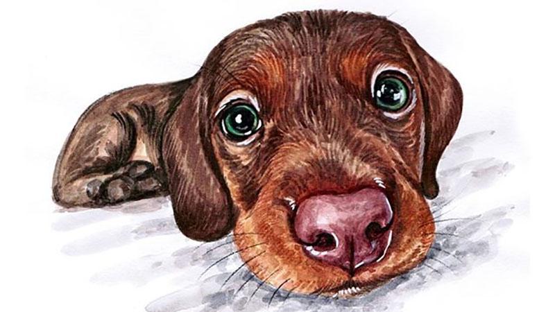 還想不透家裡毛小孩心裡在想什麼嗎?就讓新穎寵物畫家來告訴你,原來我們可愛的毛孩兒都會不小心從表情透漏心情呢~