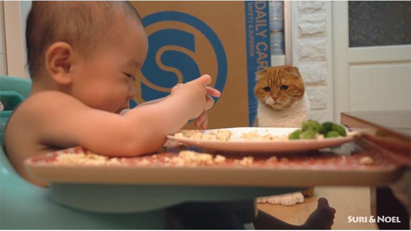 想吃,但貓貓不說!端坐「哀怨」望寶寶邊吃邊玩ㅠㅠ