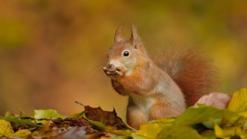 用鏡頭捕捉森林小動物們的一舉一動