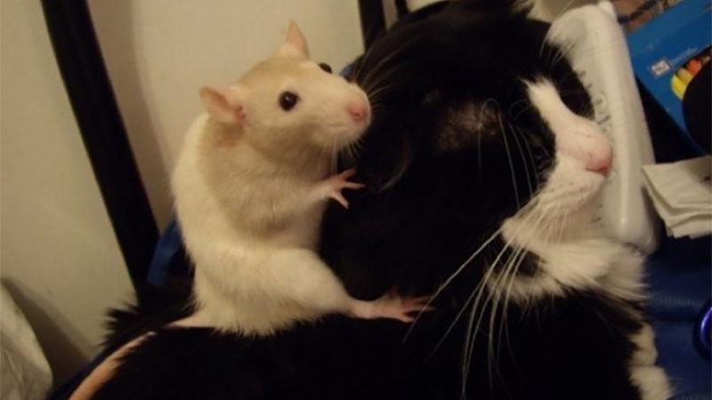 《貓鼠大戰》即將開打?不不不其實牠們是最要好的朋友!