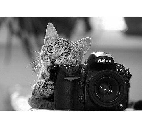 野趣橫生!動物夥伴聯手搶攝影師飯碗啦