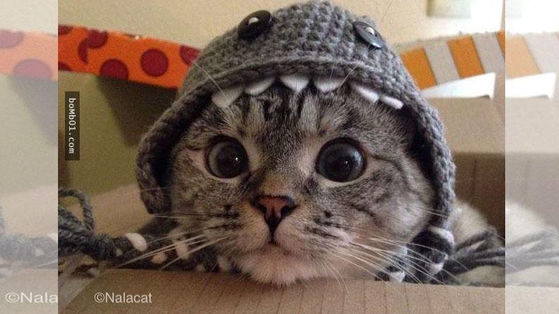 這隻萌貓咪在剪指甲時完全沒有亂動亂鬧,牠出乎大家意料的反應讓貓奴都羨慕哭了!
