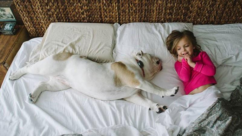 與4歲小女孩情同手足的英國鬥牛犬