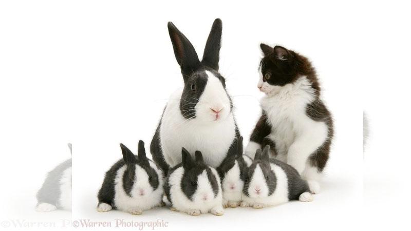 跨物種的雙胞胎,真的不是同父異母嗎?