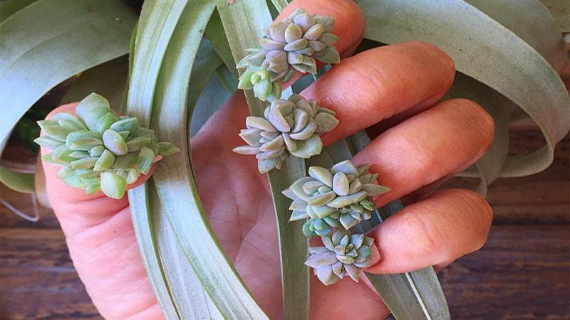 多肉植物超療癒,但是你有想過把它放在指尖上嗎?
