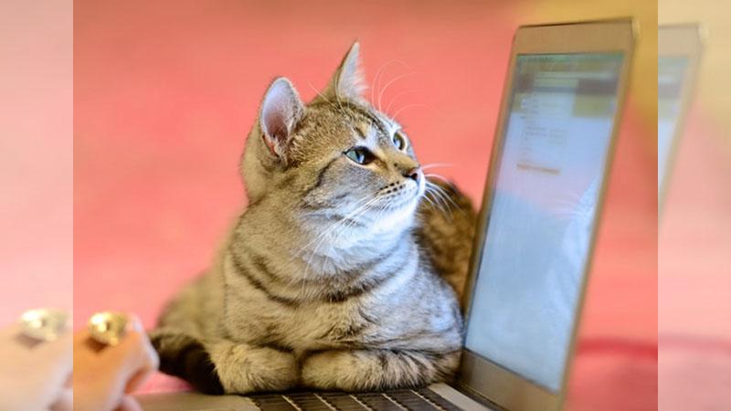 那些《阻止你用電腦的貓狗》,看到我們哀怨的眼神了嗎?
