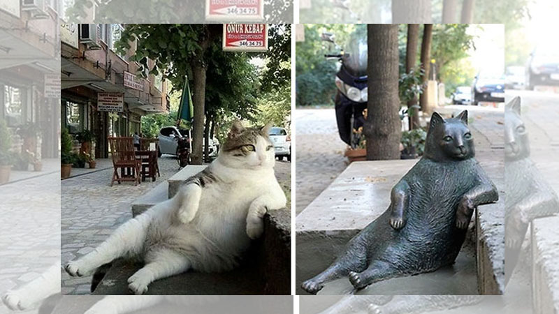 伊斯坦堡名貓《Tombili》過世,居民為了紀念牠而建了一座銅像!