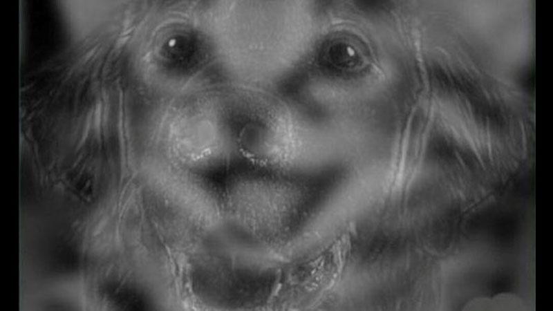 【測驗】第一眼看到的是貓還是狗?直覺洩漏你的個性!